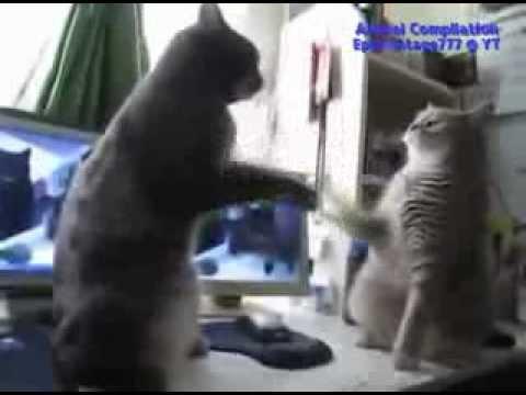 Видео онлайн Самые смешные приколы с животными) .