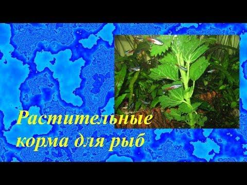 Растительные корма для рыб своими руками