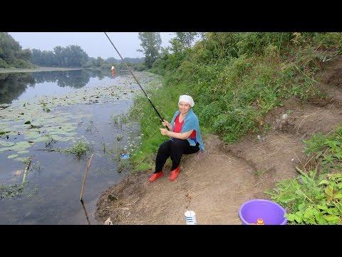 рыбалка на закидушки в камышах видео