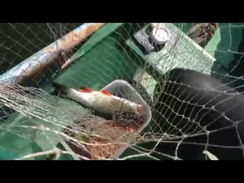 рыбалка на шлюзах в белоомуте