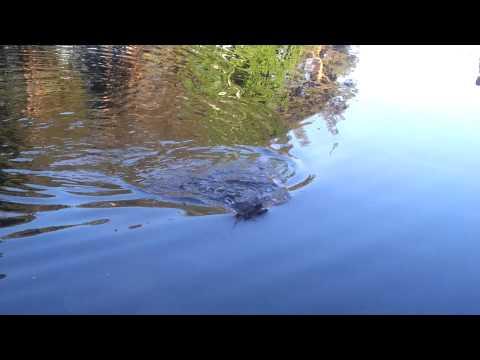рыбалка на фидер в челябинской области видео