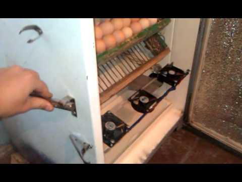 Инкубаторы своими руками из холодильника фото