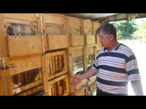 Кассетный пчелопавильон своими руками фото