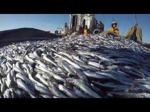 рыбалка вблизи новороссийска