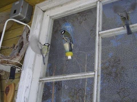 Кормушки на окнах своими руками
