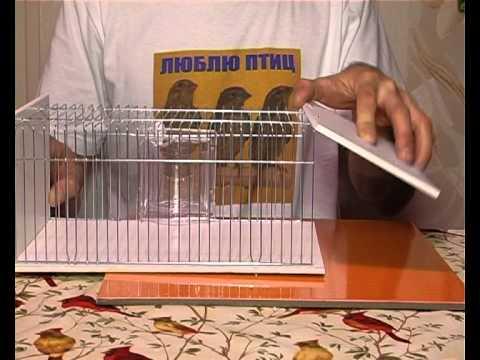 Переноска для попугаев своими руками