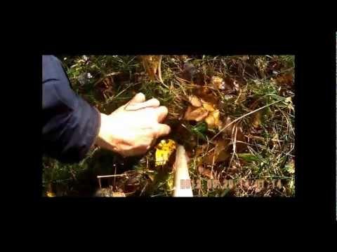 Как посадить дубовую рощу своими руками