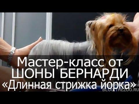 Видео мастер класс стрижки йорка