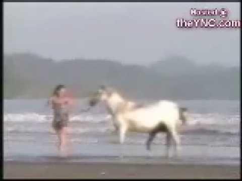 Приколы с животными секс онлайн в прямом эфире.