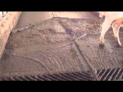 Как сделать пол сарае быками