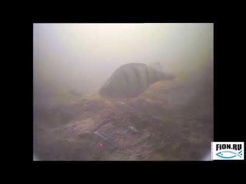 видеокамеры для рыбалки на фион