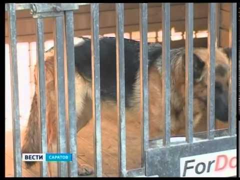 Как научить собаку держать лакомство на носу - видео на kriv.